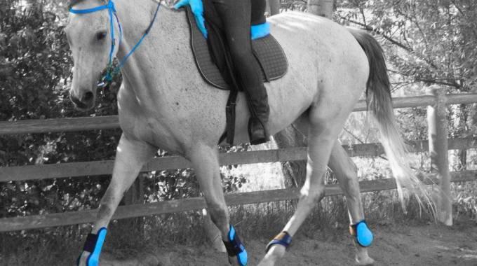 Purosangue Inglesi : la parola a Dernier, cavallo venexiano