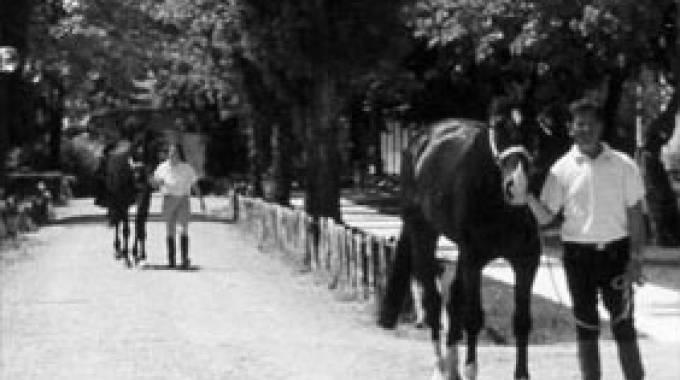 Il circolo equitazione di reggio emilia promuove il concorso letterario lo sport allo specchio - Cavalli allo specchio ...