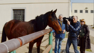 """Cavalli in Carcere ha vinto il XII premio """"Virtù Civica Panettone d'Oro"""""""